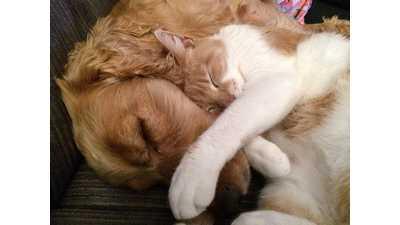 Formula de shampoo para cachorro e gato